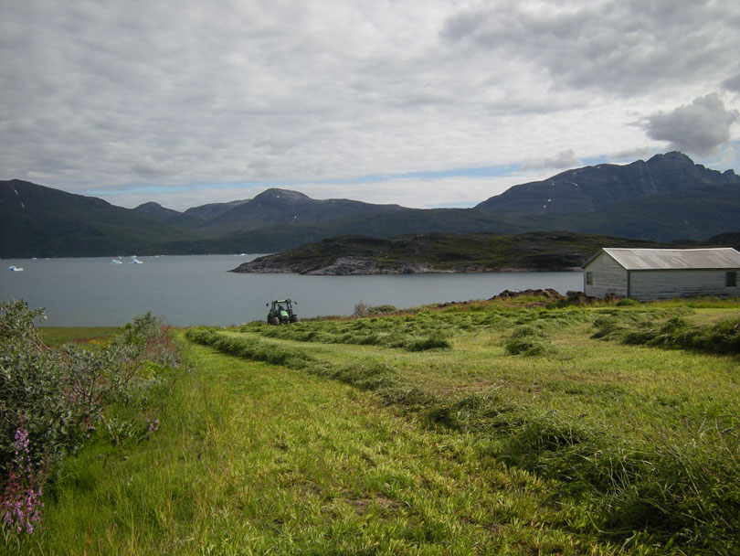 Ipiutaq guest farm, fields on the fjord side, summer