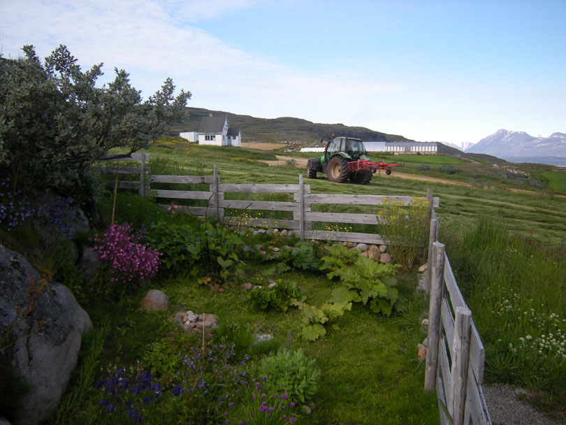 Ipiutaq guest farm, garden outside the dwelling house