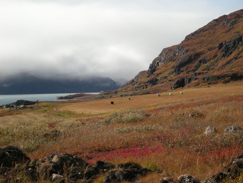Ipiutaq guest farm, fields on the fjord side, autumn