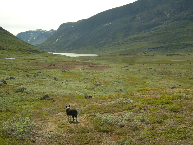 Ipiutaq guest farm, green pastures in the fertile valley Ilua